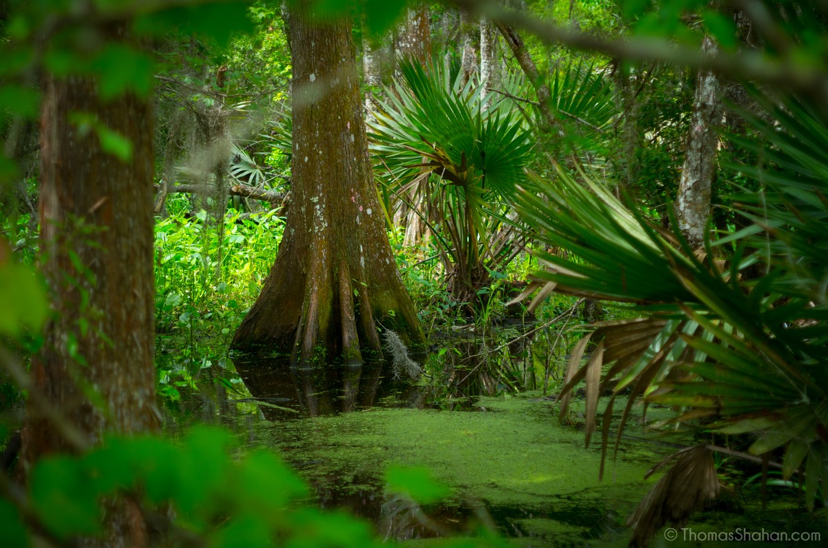 COP15: a last chance to save biodiversity?